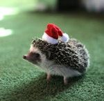 Christmas Hedgehog