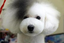 Asian fusion dog grooming