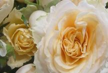 ROSES..my favorite flower!
