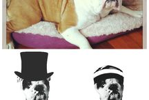 Furfrenz - Frame your furry friends for life / (2014 collection) / by FurFrenz