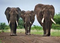 Zuid-Afrika / Reistips en inspiratie voor Zuid-Afrika: van Big Five safari in Krugerpark en Tafelberg in Kaapstad; tot walvissen en wijn aan de Gardenroute. Iedere regio van Zuid-Afrika heeft iets moois te bieden!