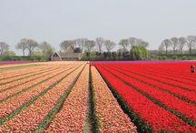 NETHERLANDS Wanderlust Wish List