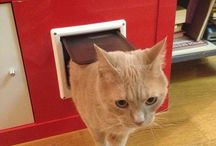 Cat projects / Cute and functional