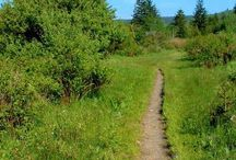 MTB Trails in Asheville and Surrounding Areas
