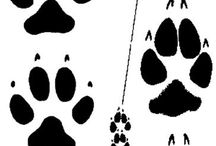 Animal Stencils / footprints and shadows for Pathfinder Playground / by Toni Wells