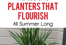 plants in pots that flourish all Summer