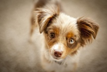 Cuties! / by Rebecca Bibb