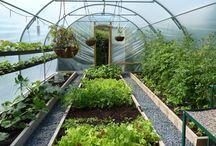 Växthustunnel