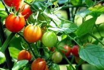 Gardening : Growing Guides