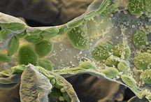 Tiny Cell