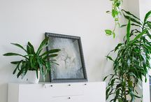Indoor plants / by Cintia MyPoppet