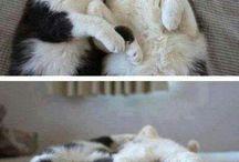 Cose da gatti
