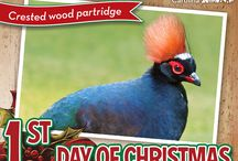 Festive! / We are counting down the 12 days until Christmas at the North Carolina Zoo.