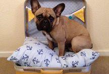 DIY Perros / Reciclaje de cositas para conseguir grandes cosas para tu perro