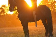 I dream of friesians.... And every horse on earth