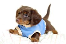 Cute Pets / Naturally Pets are Cute and Adorable...Some of the pics which touches your Heart...