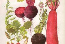 Root Veggies & Casseroles
