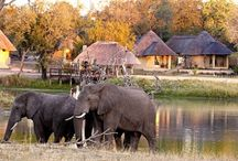Great Safari Lodges in Sabi Sand / Our favourite safari lodges and tented camps in the magnificent Sabi Sand Private Game Reserve, 'land of the leopard'.