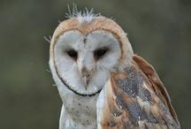 Owls  / by Renata Barboza-Murray