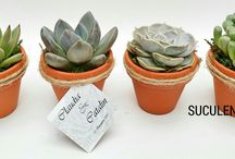 Marturii / Marturii de nunta si botez cu plante suculente Wedding and baby shower favors with succulents.
