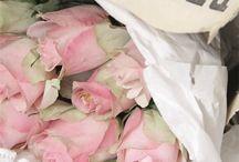 ♥ sweet roses ♥