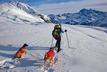 Winter / Dog friendly winter activities
