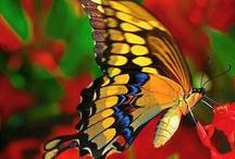 birds/butterflies / by Mickey Stone