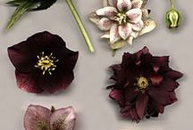 Tuinbloemen & planten