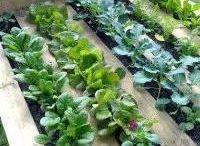 Zahrada palety