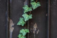 Plants / Harry Potter