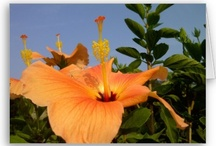 Orange and Yellows / Colorful and bright, orange and yellow what a wonderful sight!