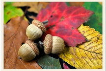 AH loves Autumn Colours