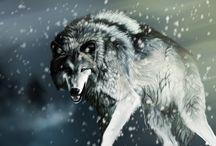 Wolf༄ / E mentre tu lo immagini scappare lui ti sta già osservando immobile e muto da quegli alberi celato quasi fossi eterea luna e splendente madre di ogni fiocco di neve