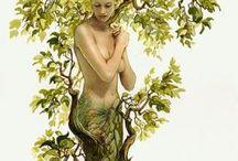 stromy, obrazy