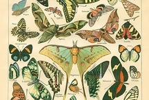 Butterflies, moths, insects