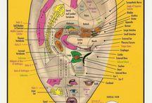 diagramas medicos