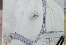 Horse Portraits / A collection of my own coloured pencil commissions