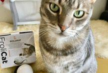 Instapet - instagram d animaux / Retrouvez des comptes Instagram d animaux   Ce tableau collaboratif est ouvert à tous (les comptes instapet)  Pour le rejoindre il suffit :  - d être abonné au tableau  - de me contacter sur Pinterest en précisant le nom de ce tableau   ⚠️ maximum 5 épingles par jour par personne  Merci de n'épingler que les photos de votre compte instagram  http://confidencescelesteetetoile.fr/chien-et-chat