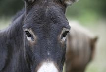 Favourite Donkey pictures