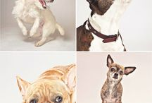Dogs making the news / Collection of news articles about dogs from around the globe