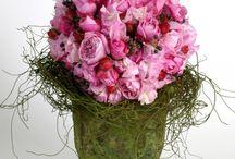 Kukat / Flowers
