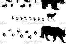 Urme animale