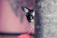 adoro gatos / by gabriela barbosa