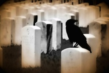 Crows and Ravens / Crows are very social, sometimes forming flocks in the millions. Inquisitive and sometimes mischievous, crows are good learners and excellent problem-solvers.  Ravens are confident, inquisitive birds. / by Happy Camper