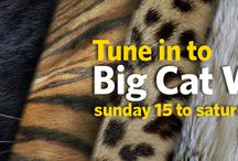 National Geographic Big Cat Week / National Geographic Big Cat Week
