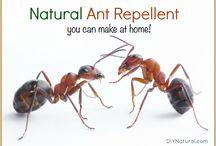 Natural Pest Control Ideas