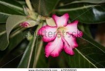 Stock Photographs / Photographs for sale on Shutterstock