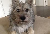 Ollie-Man / My little wolf