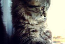 I love cats / Favourite animal