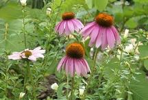 Lieblingsblumen Garten
